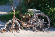photo nature morte velo rouille : V�lo coquille